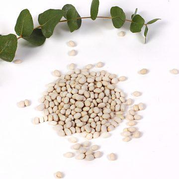 biela fazuľa perlička
