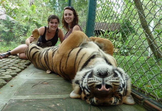 eko cestovanie tiger atrakcia